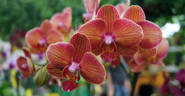 Sustratos para orquídeas
