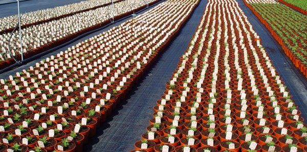 Sustratos para plantas de temporada