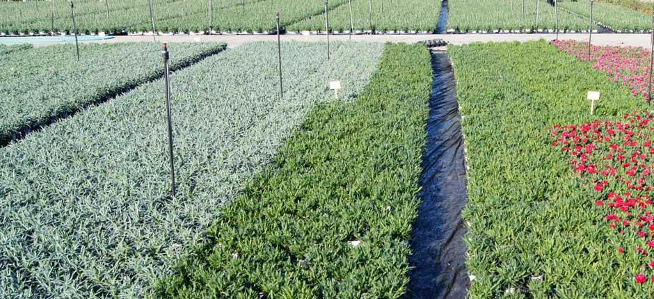 sustratos-para-produccion-de-plantas